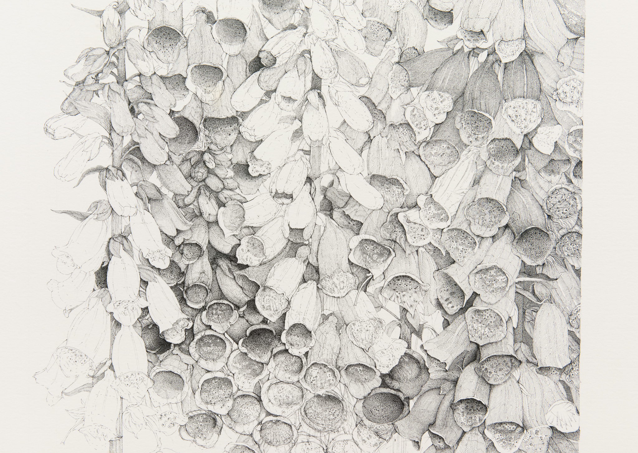 ​Charmian Johnson, detail view, completed 2017, ink on paper, 26 x 34 in. (66 x 86 cm) by