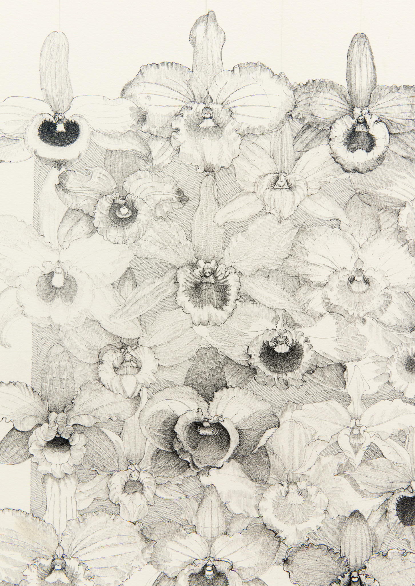 ​Charmian Johnson, detail view, 1985–1988, ink on paper, 34 x 26 in. (86 x 66 cm)​​ by