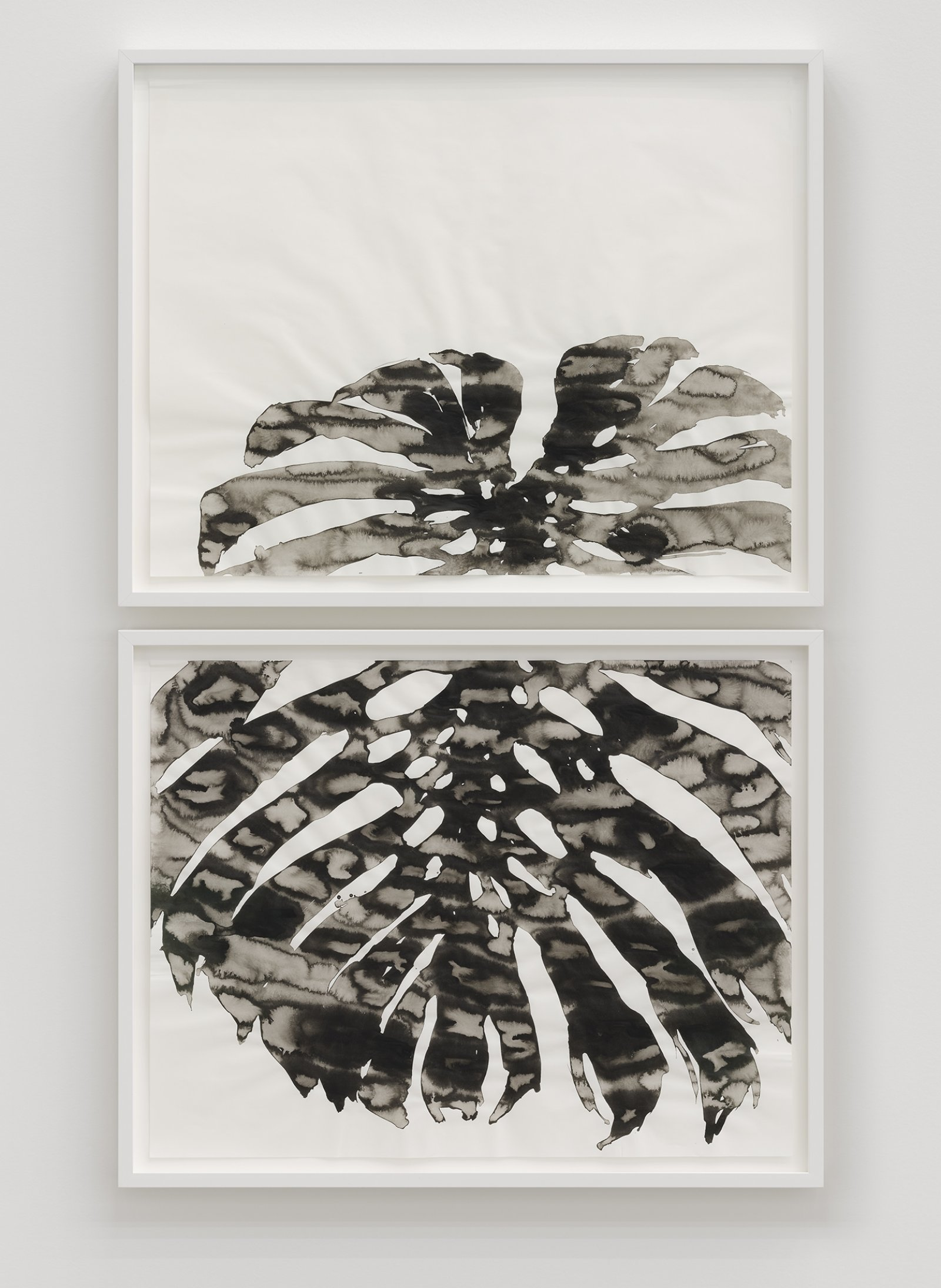 Abbas Akhavan, Monstera deliciosa (studio), 2017, ink on paper, diptych, each 22 x 28 in. (56 x 71 cm) by Abbas Akhavan