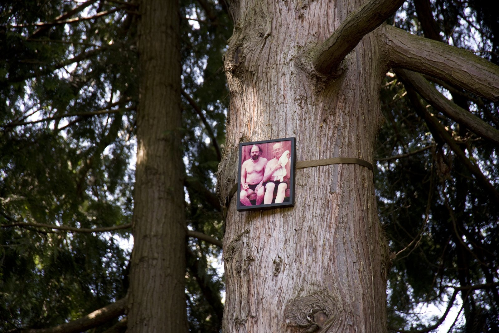 Geoffrey Farmer, If You Want To See Something Look at Something Else (Allen Ginsberg 1926–1997), 2011, 50 colour photographs mounted on perspex, framed, dimensions variable. Installation view, Volunteer Park, Seattle, USA, 2019
