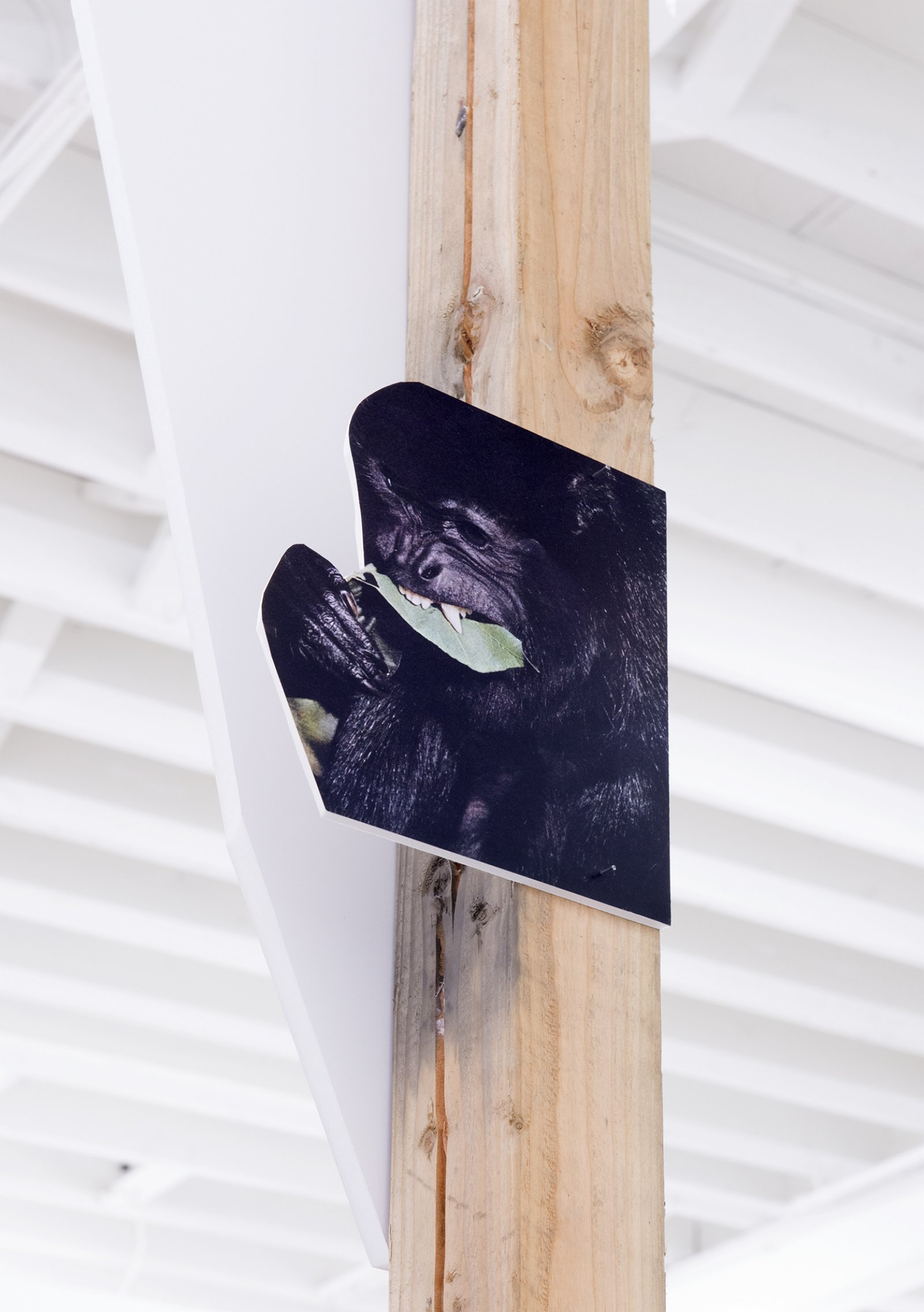 Geoffrey Farmer, In the dark pool the grass grows. In the grass there is night. Hold tight, and climb the tree, eating leaves then leap!(detail), 2014, douglas fir pole, 6 photographs mounted on foamcore, 200 x 4 x 4 in. (508 x 9 x 9 cm)