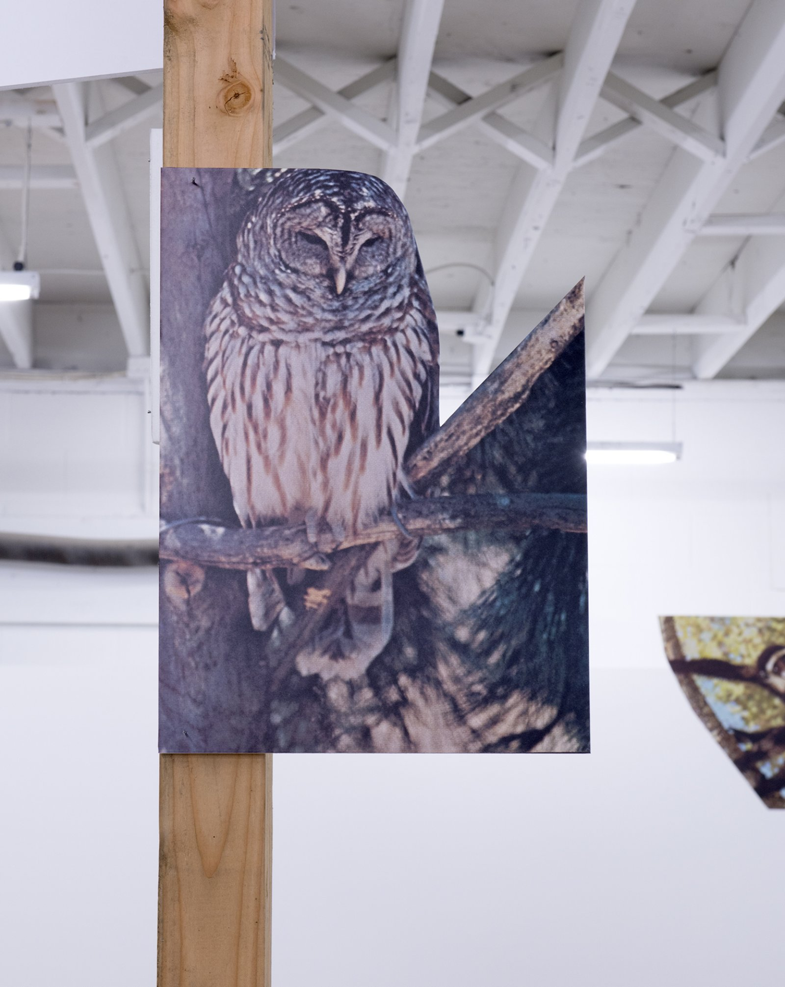Geoffrey Farmer, The other ate one man, one man was set adrift, one man turned into a snake, one man washed ashore and became a statue and the others eyes were stolen by the owl.(detail), 2014, douglas fir pole, 6 photographs mounted on foamcore, 200 x 4 x 4 in. (508 x 9 x 9 cm)