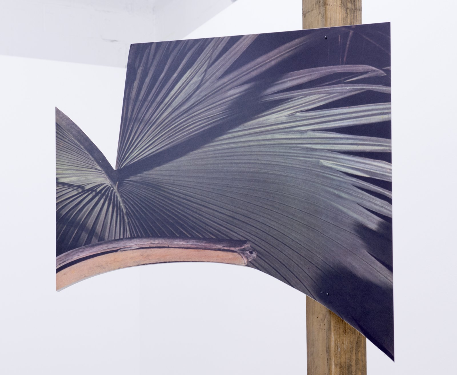 Geoffrey Farmer,This one is the lightness of a palm frond, the sound of a lute, the colour of fruit. The expressions of a monkey. A large orange eye. I drift in the warm wind.(detail), 2014, douglas fir pole, 6 photographs mounted on foamcore, 200 x 4 x 4 in. (508 x9 x 9 cm)