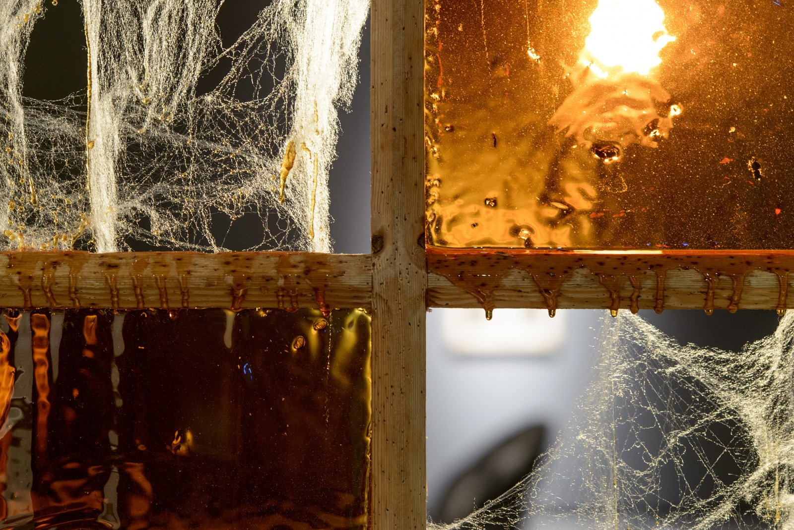 Julia Feyrer, Bugged/Webbed, 2013, sugar glass with dead bugs, fake cobwebs, bleached hole riddled wood frame, dimensions variable. Installation view, The Intellection of Lady Spider House, Art Gallery of Alberta, 2013.