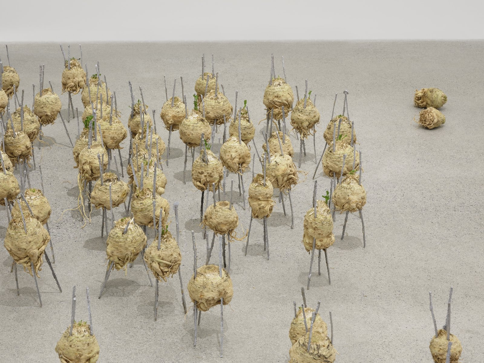 Rochelle Goldberg, Cosmic Footing (detail), 2019, celeriac, ginger, cast aluminum matches, cast bronze matches, installation dimensions variable by Rochelle Goldberg