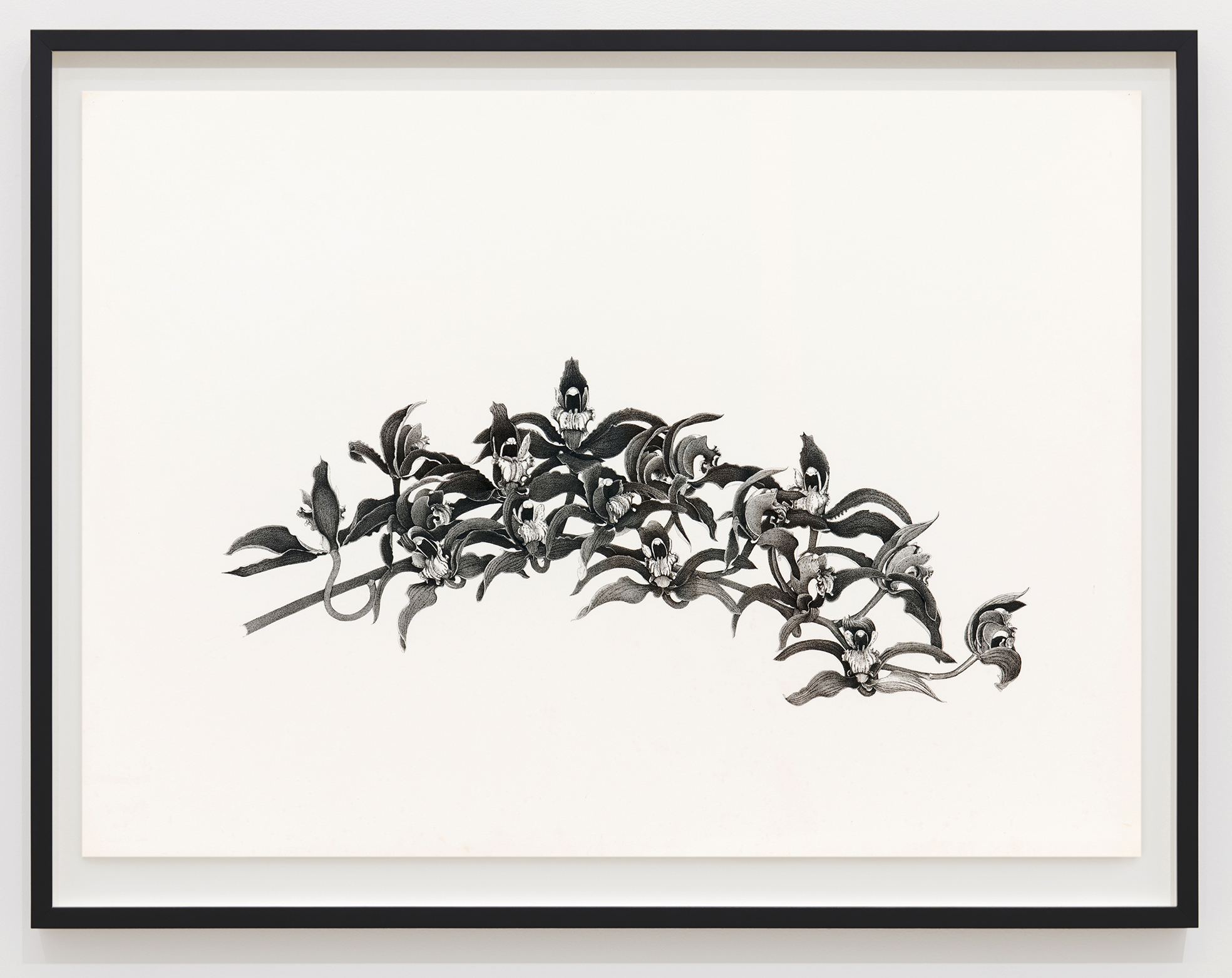 Charmian Johnson, not titled, 1980, ink and graphite on paper, 26 x 34 in. (65 x 85 cm) by
