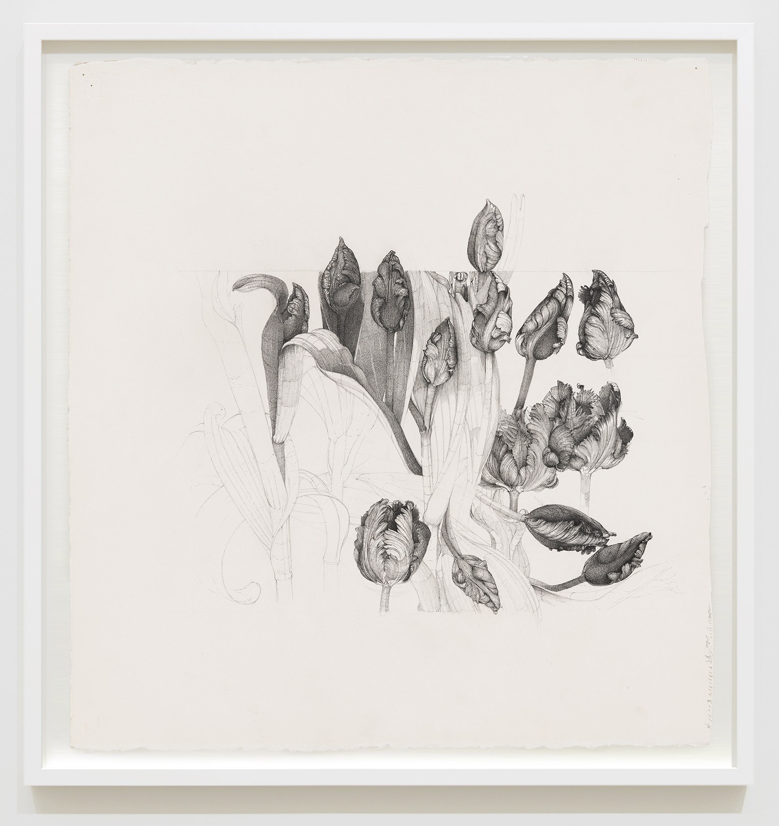 Charmian Johnson, not titled, unknown date, ink and graphite on paper, 27 x 26 in. (67 x 65 cm) by