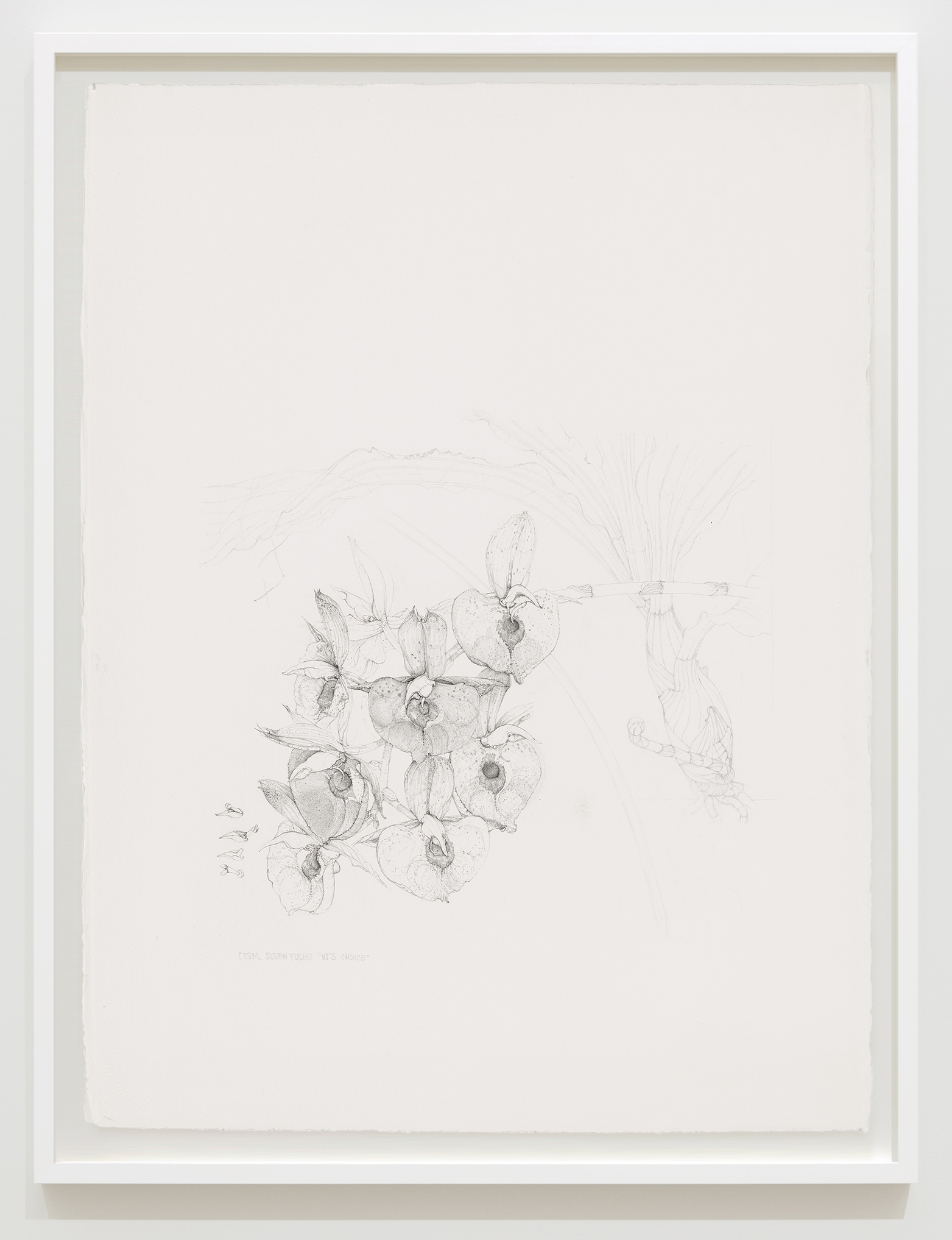 """Charmian Johnson, CTSM. Susan Fuchs """"Vi's Choice"""", unknown date, ink and graphite on paper, 34 x 26 in. (85 x 65 cm) by"""