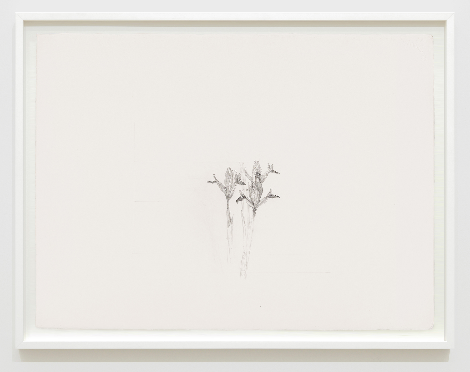 Charmian Johnson, not titled, unknown date, ink on paper, 26 x 34 in. (65 x 85 cm) by