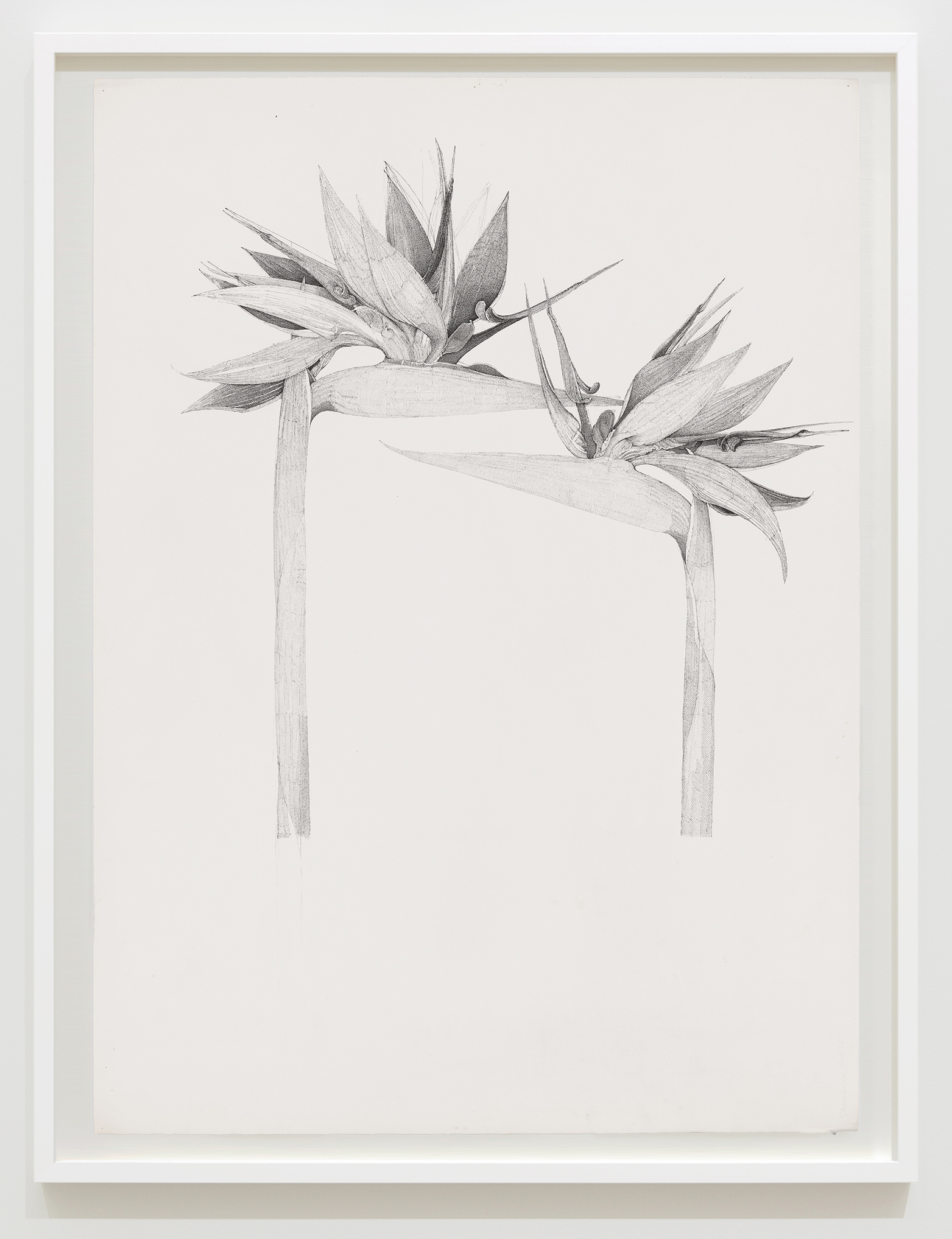 Charmian Johnson, not titled, unknown date, ink and graphite on paper, 34 x 26 in. (85 x 65 cm) by