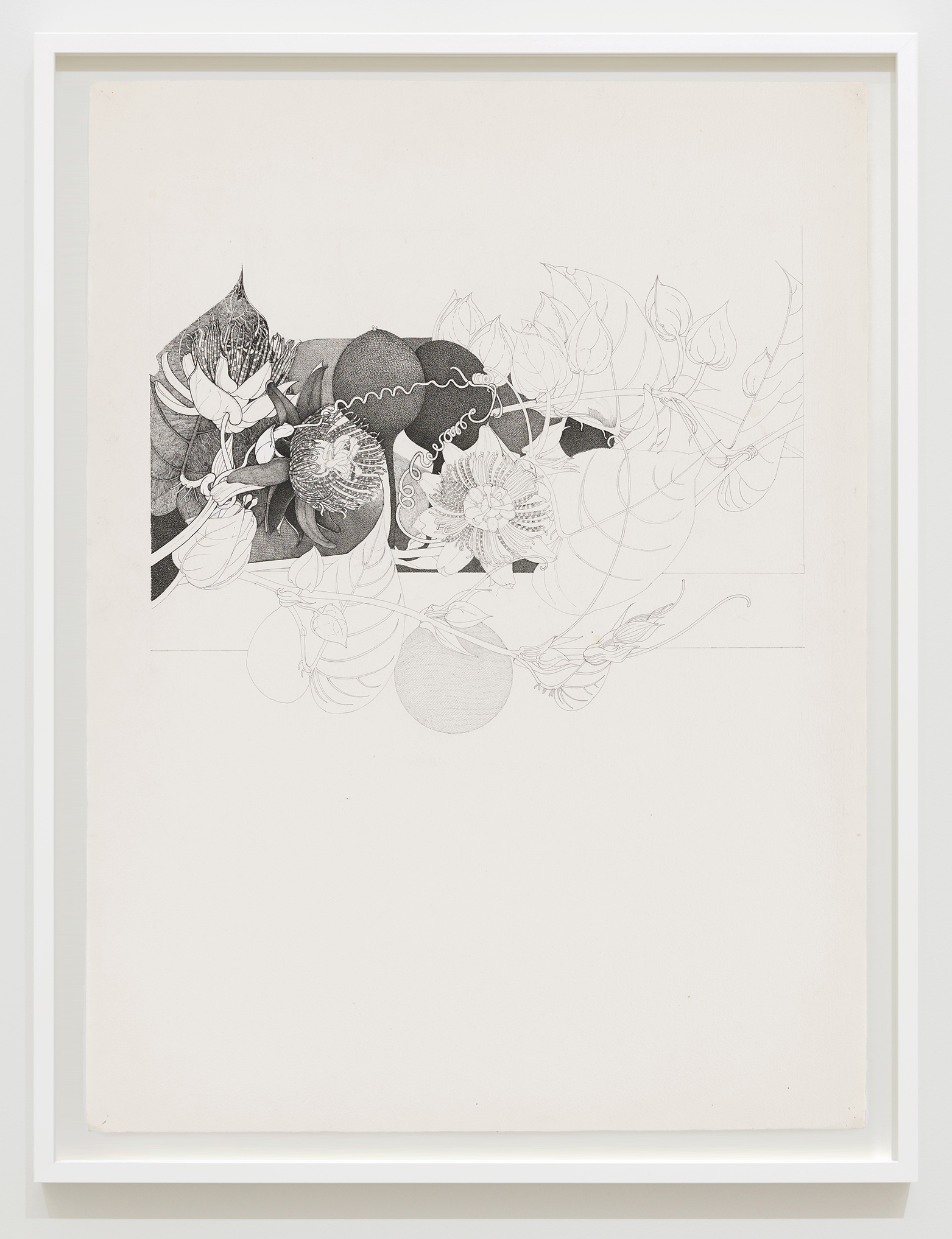 Charmian Johnson, not titled, unknown date, ink on paper, 34 x 26 in. (85 x 65 cm) by