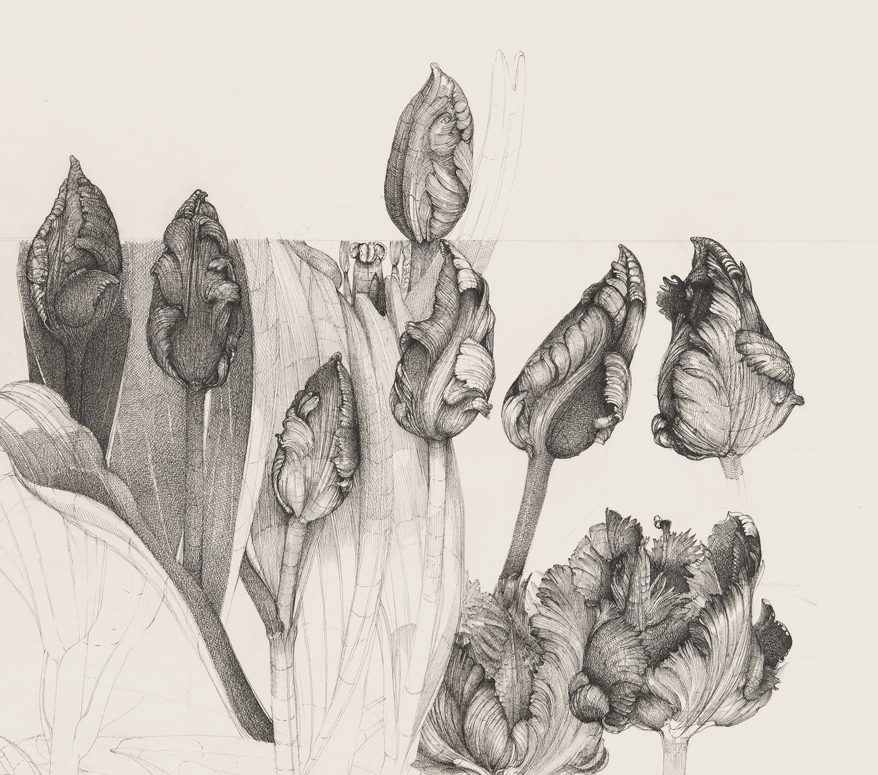 Charmian Johnson, not titled (detail), unknown date, ink and graphite on paper, 27 x 26 in. (67 x 65 cm) by