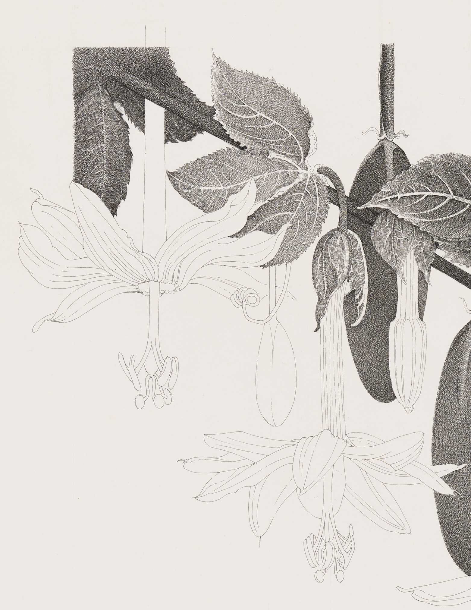 Charmian Johnson, not titled (detail), unknown date, ink on paper, 26 x 30 in. (65 x 76 cm) by