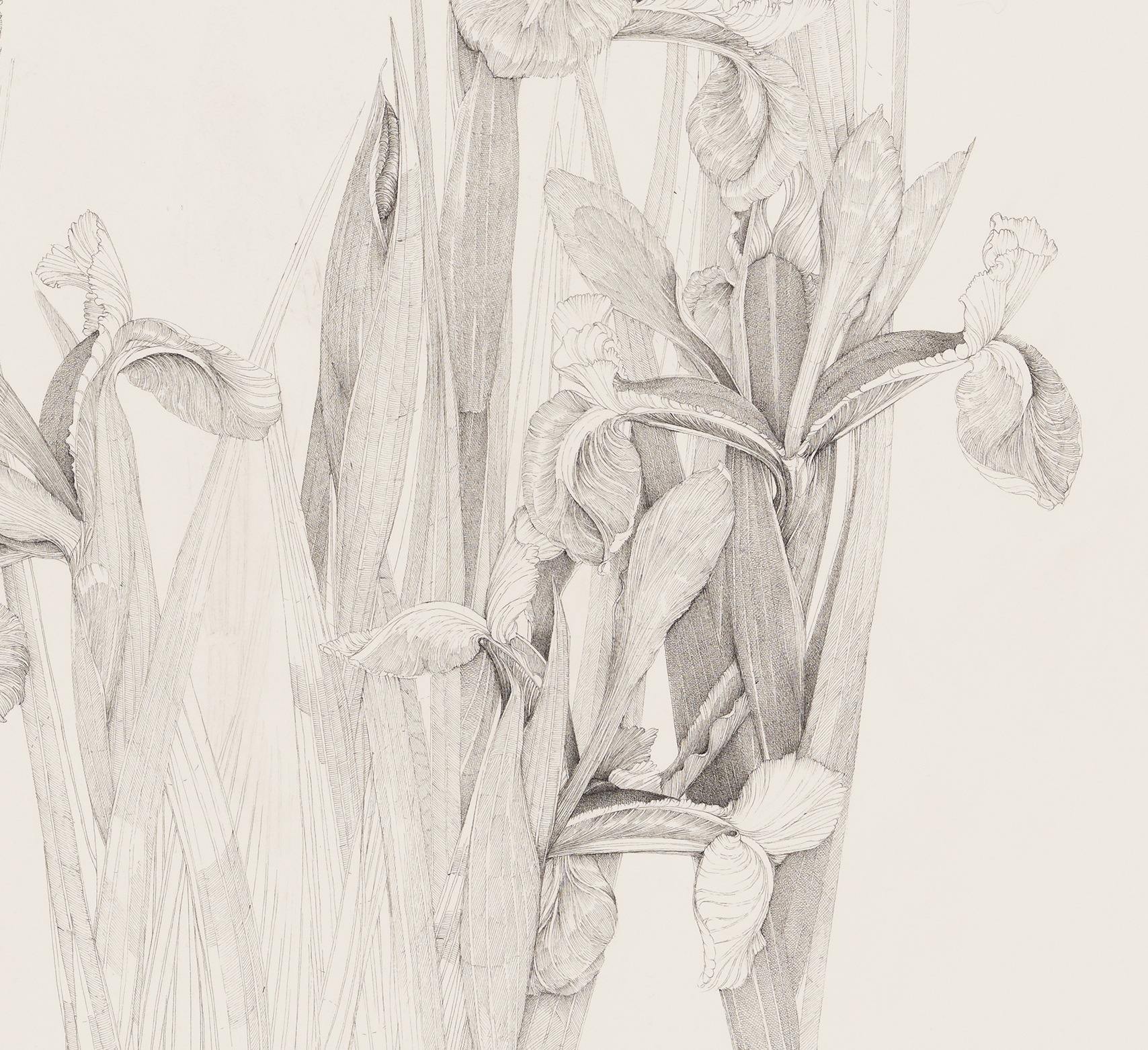Charmian Johnson, not titled (detail), unknown date, ink and graphite on paper, 34 x 26 in. (85 x 65 cm) by