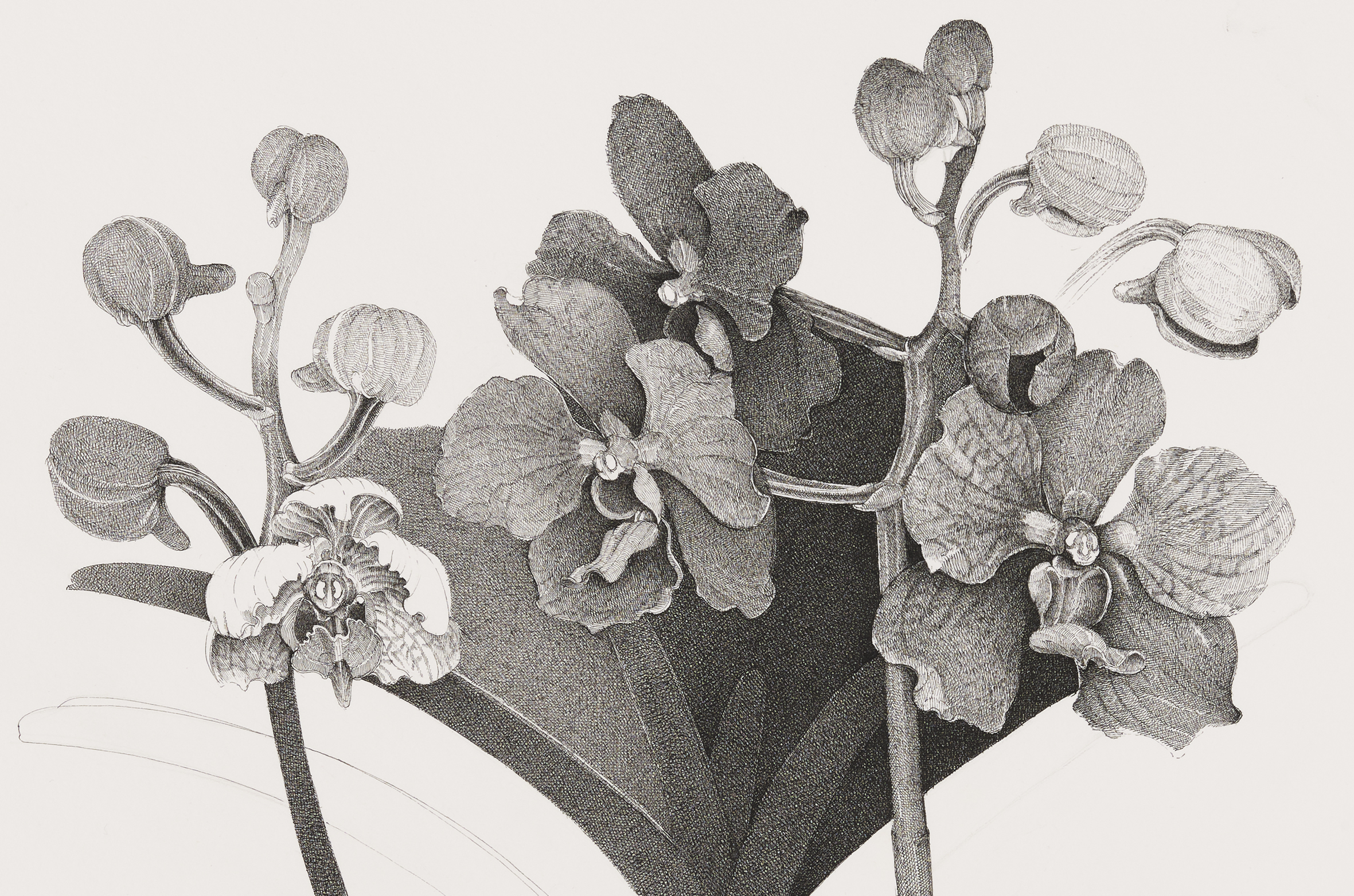 Charmian Johnson, not titled (detail), unknown date, ink on paper, 34 x 26 in. (85 x 65 cm) by