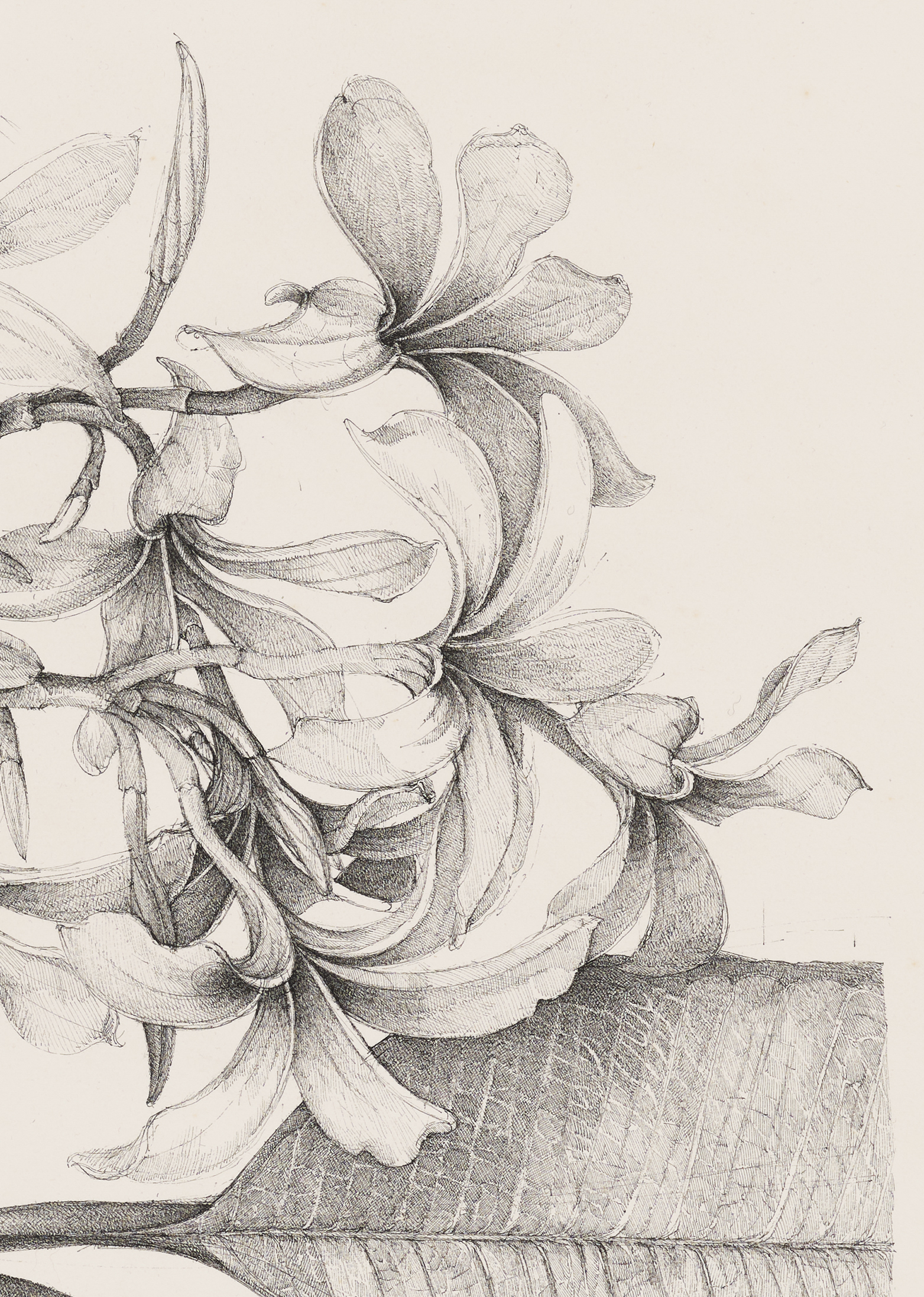 Charmian Johnson, not titled (detail), unknown date, ink on paper, 26 x 34 in. (65 x 85 cm) by