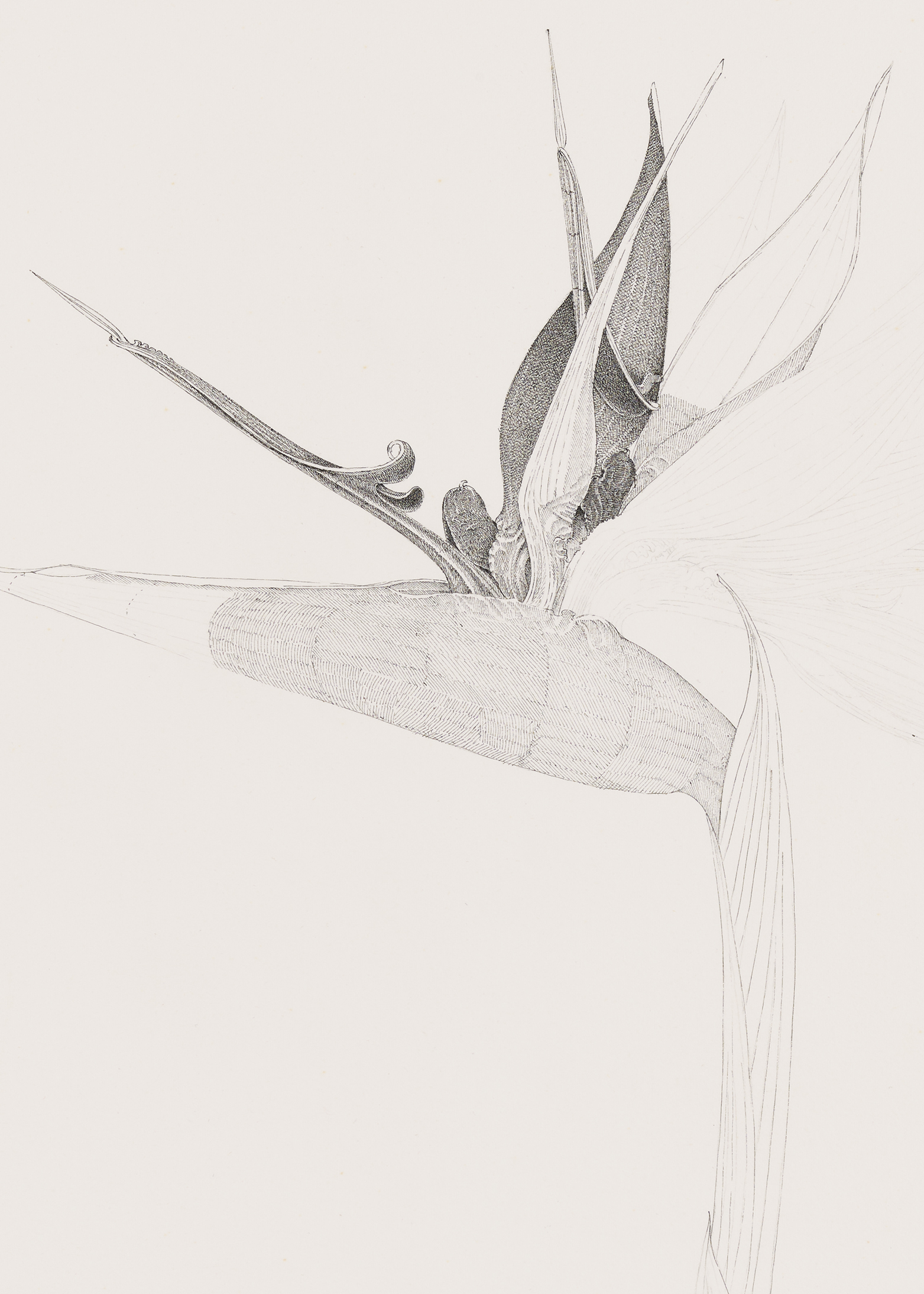 Charmian Johnson, not titled (detail), unknown date, ink and graphite on paper, 31 x 23 in. (79 x 58 cm) by