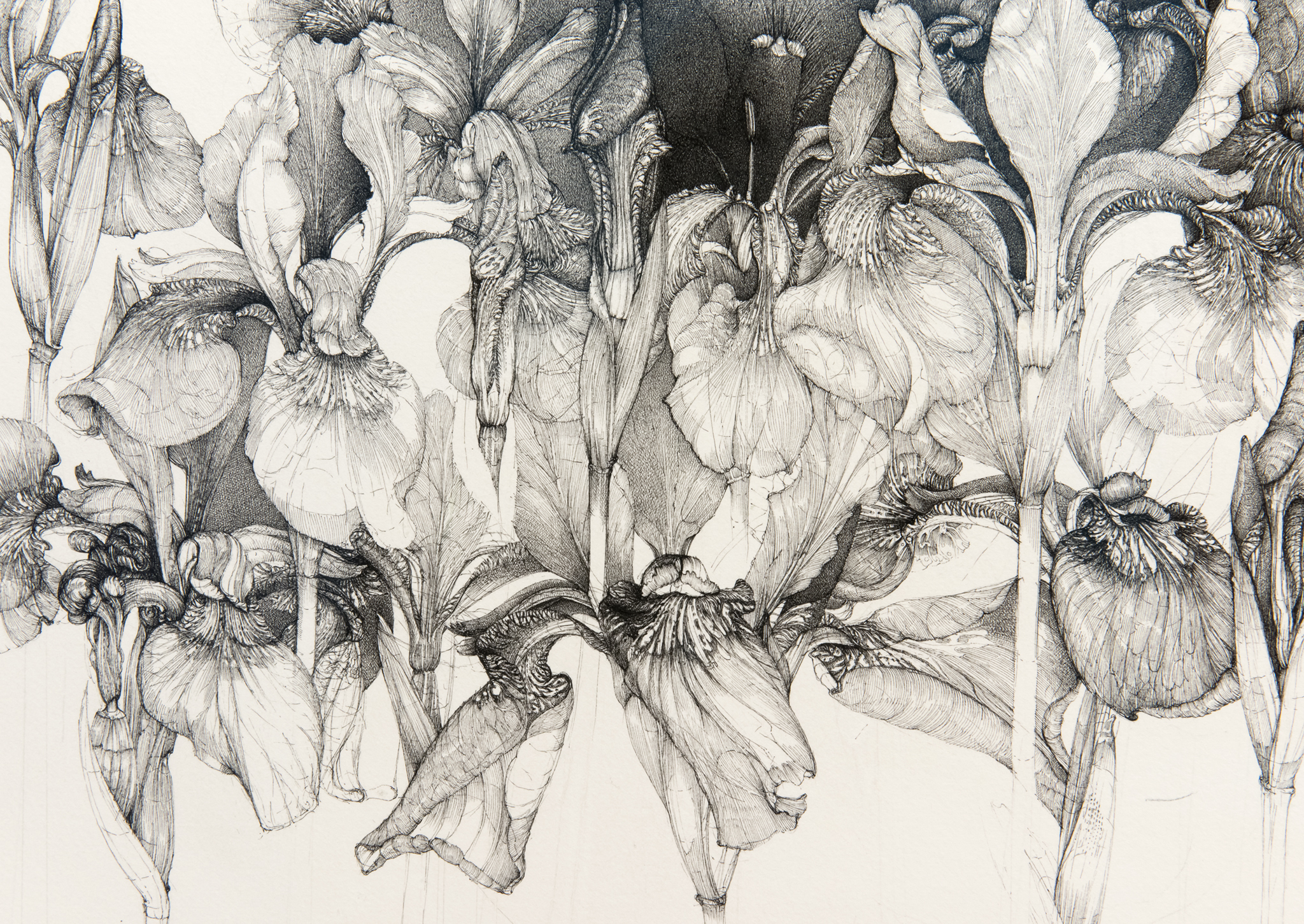 ​​Charmian Johnson, detail view, completed 2018, ink on paper, 26 x 34 in. (66 x 86 cm)​​ by