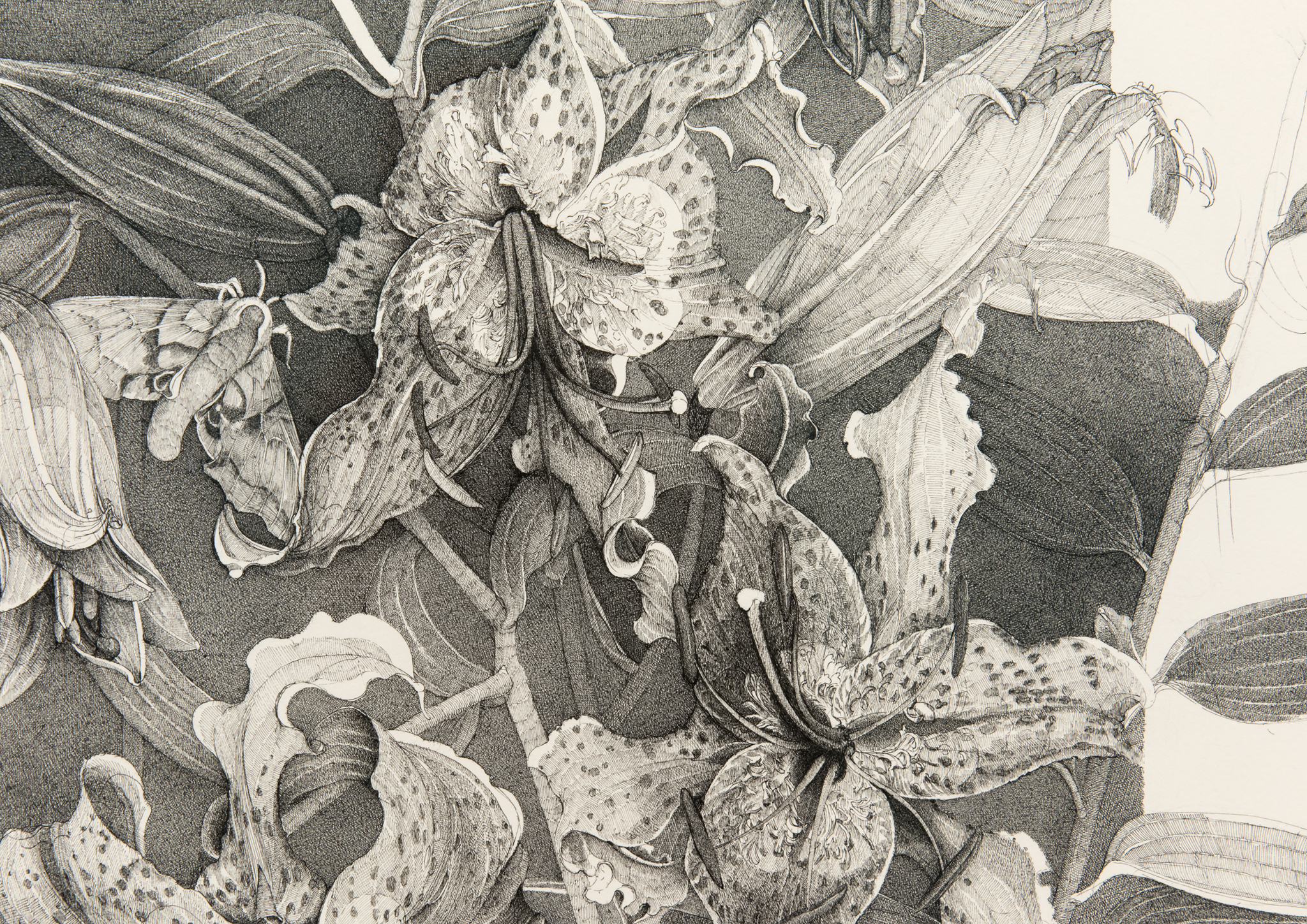 ​​Charmian Johnson, detail view, late 1990s–2017, ink on paper, 34 x 26 in. (86 x 66 cm)​ by