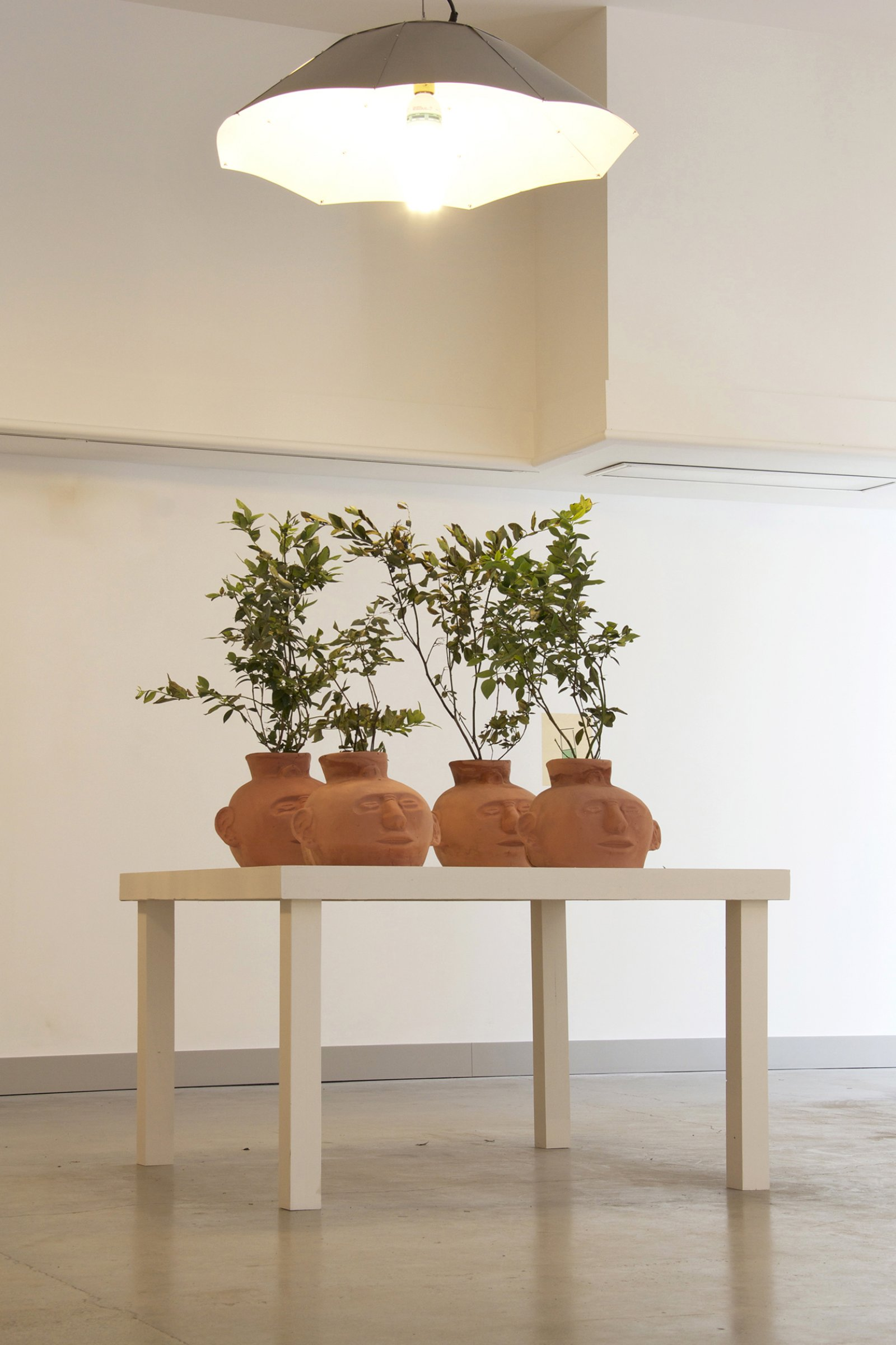 Duane Linklater,Blueberries for 12 Vessels, 2015, blueberry bushes, clay, earth, dimensions variable