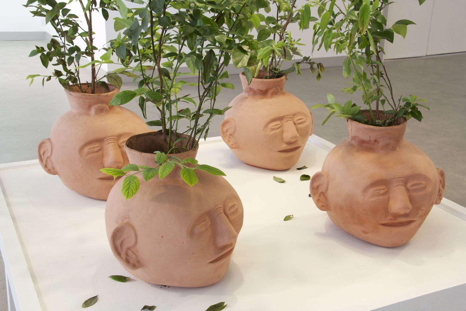 Duane Linklater, Blueberries for 12 Vessels(detail), 2015, blueberry bushes, clay, earth, dimensions variable