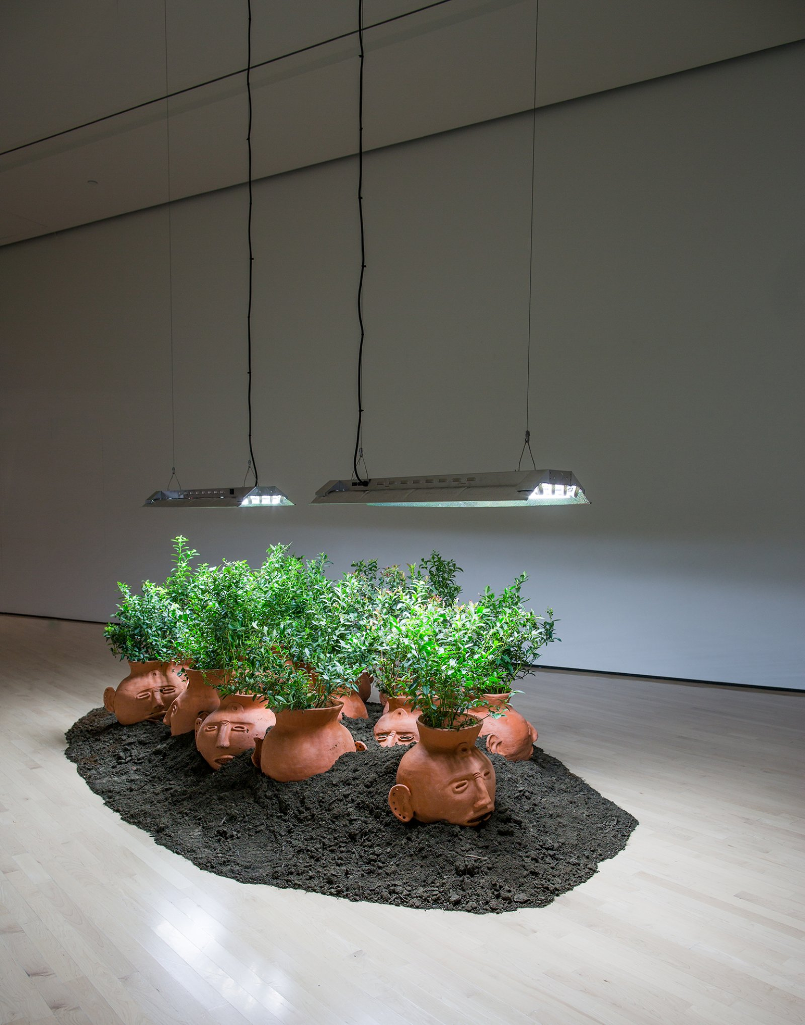 Duane Linklater, Blueberries for 15 vessels, 2012–2017, blueberry bushes, clay, earth, dimensions variable. Installation view, Field Station: Duane Linklater, MSU Broad, East Lansing, MI, 2017