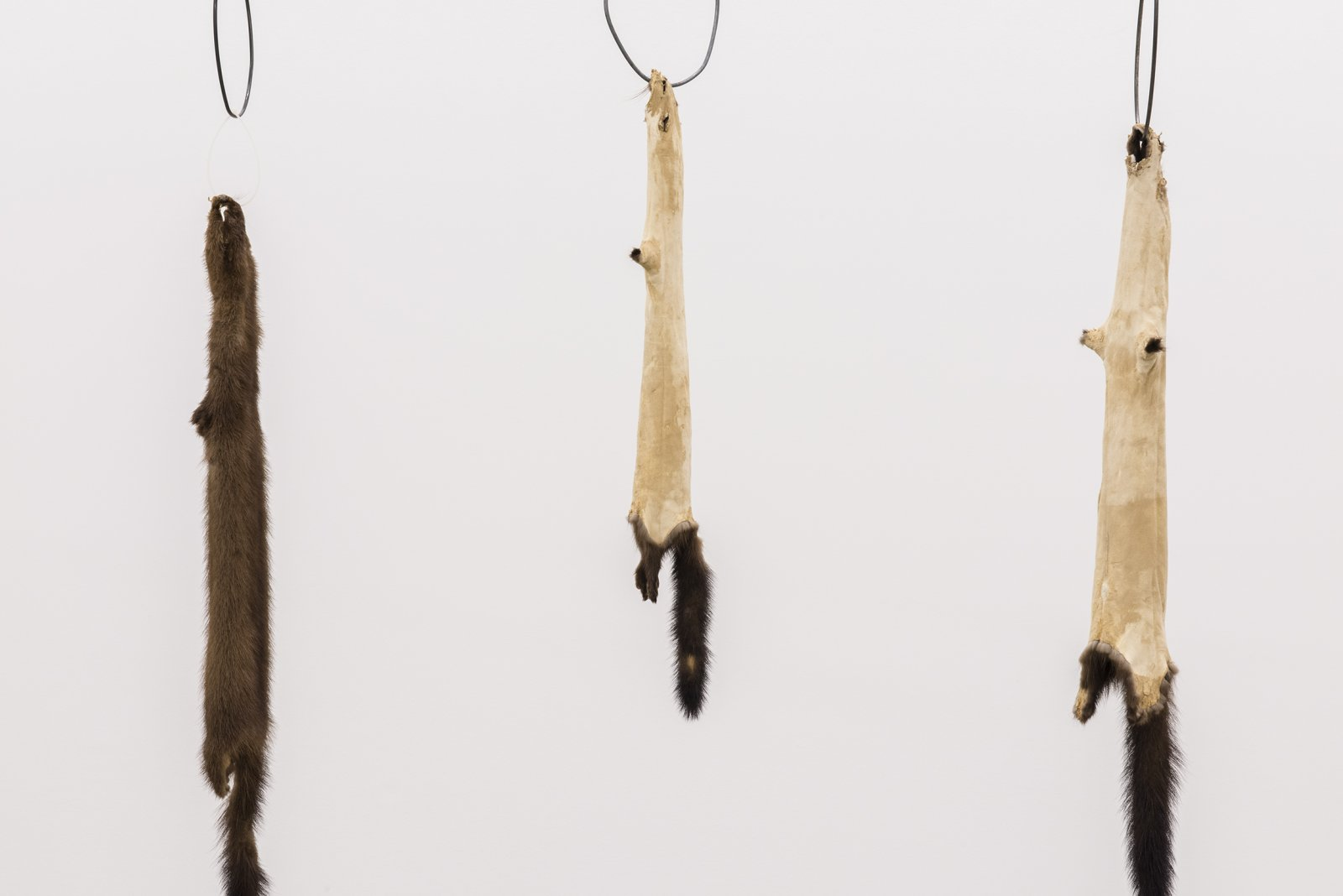 Duane Linklater, Little ghosts (detail), 2014, mink furs, garment rack, plastic cable tie, hangers, 66 x 60 x 20 in. (168 x 151 x 52 cm) by Duane Linklater