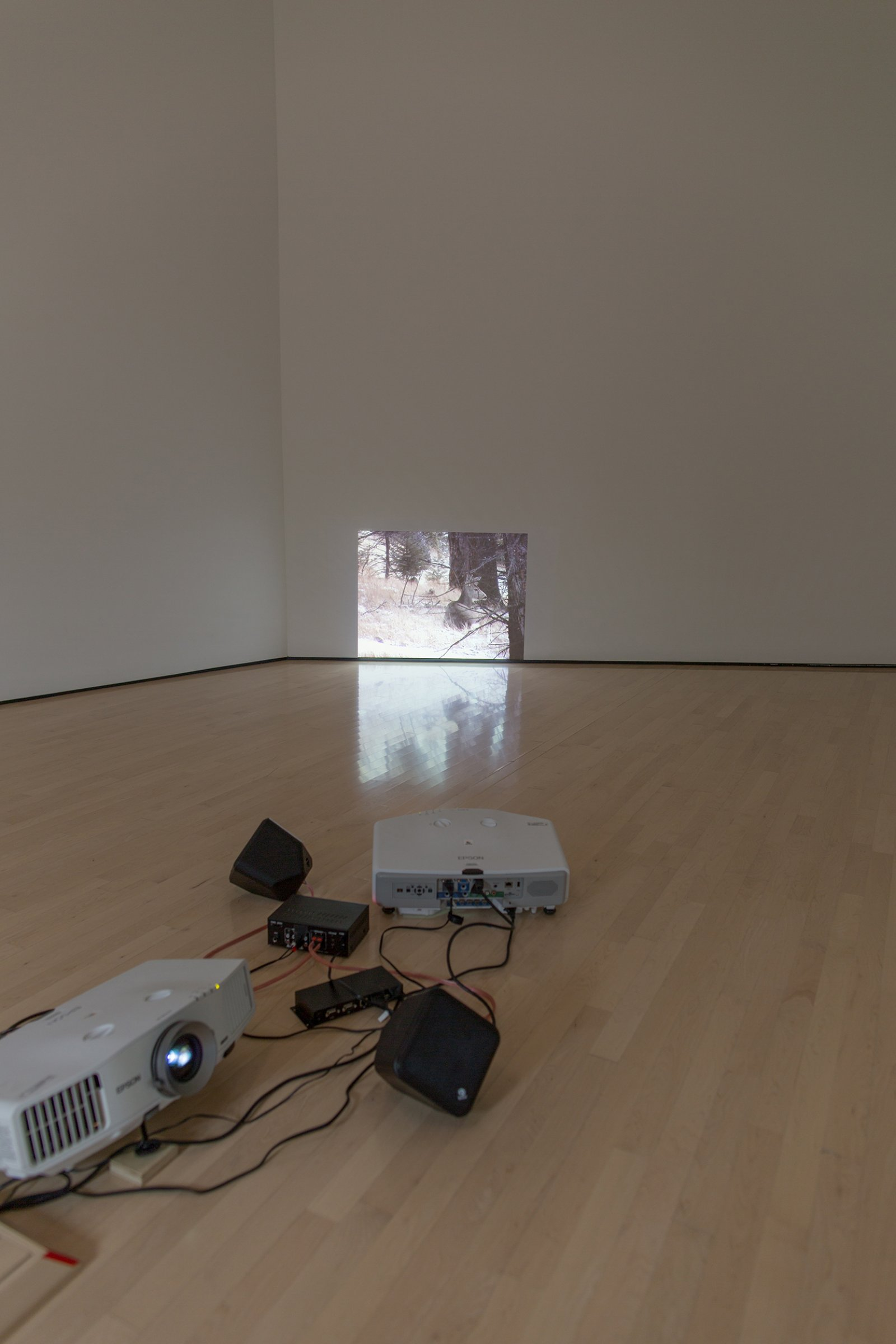 Duane Linkater, Me and my cousin are not hunters, 2013, video projection, 12 minutes, 14 seconds. Installation view, Field Station: Duane Linklater, MSU Broad, East Lansing, MI, 2017 by Duane Linklater