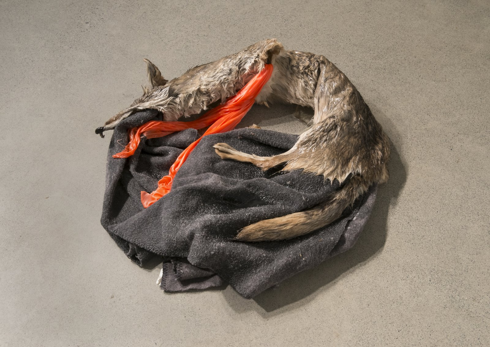 Duane Linklater, Torpor (detail), 2016, coyote fur, wool blanket, polyester cloth, resin, found picture, shoelace, brick, dimensions variable