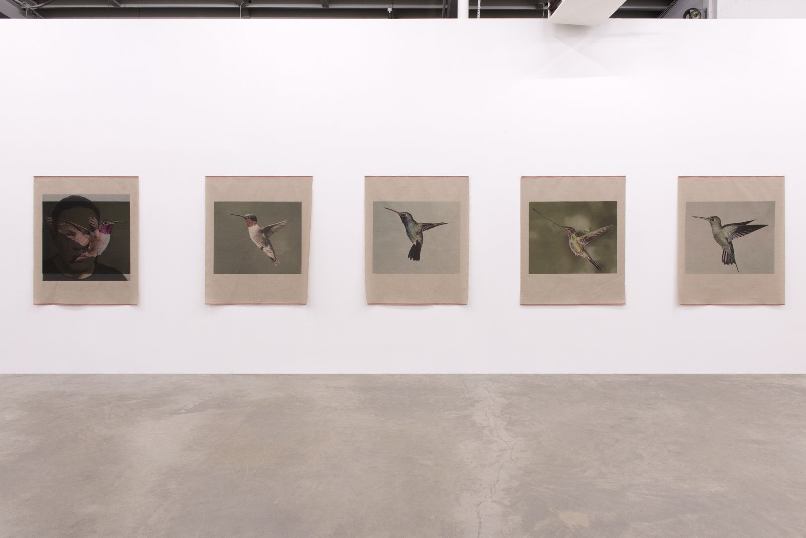 Duane Linklater, You chose feathers, 2014, 5 inkjet prints on linen, nails, each print: 54 x 43 inches (136 x 110 cm)
