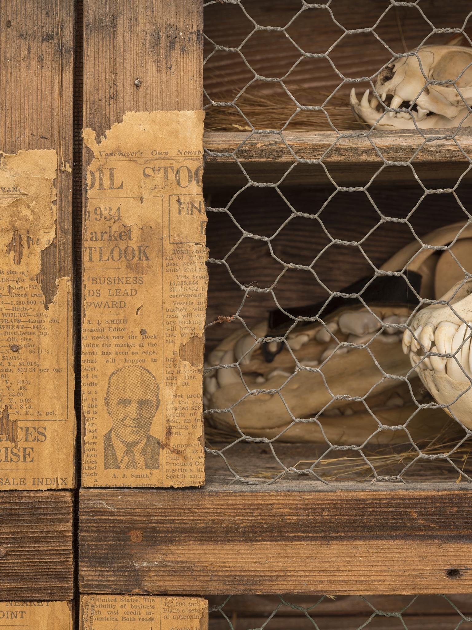 Liz Magor, The Hutch (detail), 1976, natural materials, wood, bones, 33 x 38 x 15 in. (84 x 97 x 38 cm) by