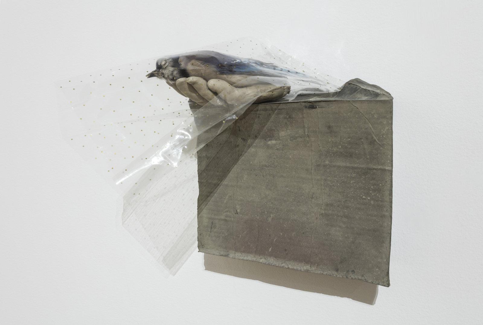 Liz Magor, Speckled Veil, 2015, polymerized gypsum, naturalized bird, cellophane, 14 x 12 x 13 in. (35 x 31 x 33 cm). Installation view, Habitude, Musée d'art contemporain de Montréal, 2016 by Liz Magor