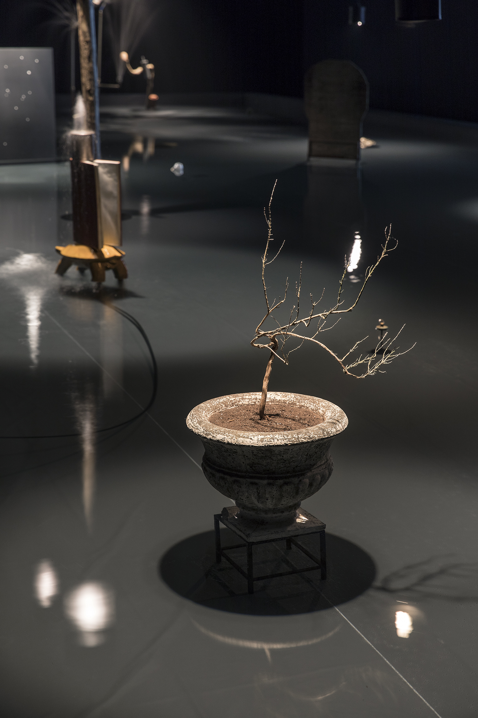 Gareth Moore, Rose Jericho / Lungfish Grandad, 2017, concrete planter, found dead plant, 31 x 20 x 16 in. (80 x 52 x 40 cm). Installation view, A Dark Switch Yawning..., Salzburger Kunstverein, Salzburg, 2017 by