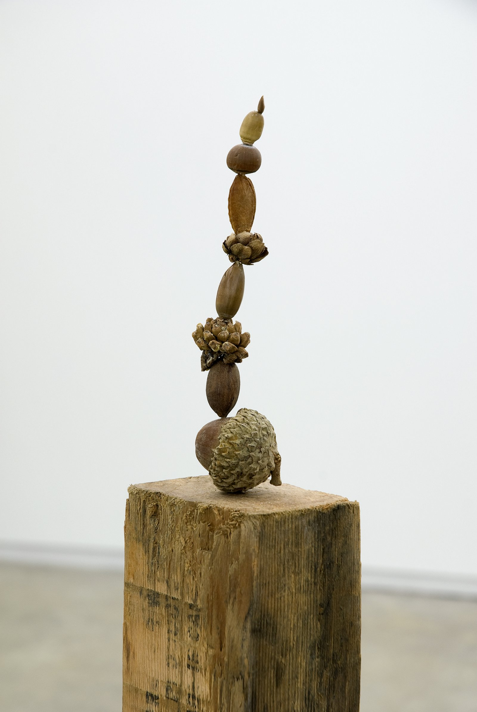 Gareth Moore, Judd also planted these trees from Uncertain Pilgrimage (detail), 2006-2009, nectarine pit, apple seed, Rothko pecan, Judd cone, unidentified seeds and nuts, found wood, 47 x 4 x 3 in. (118 x 9 x 6 cm) by Ashes Withyman