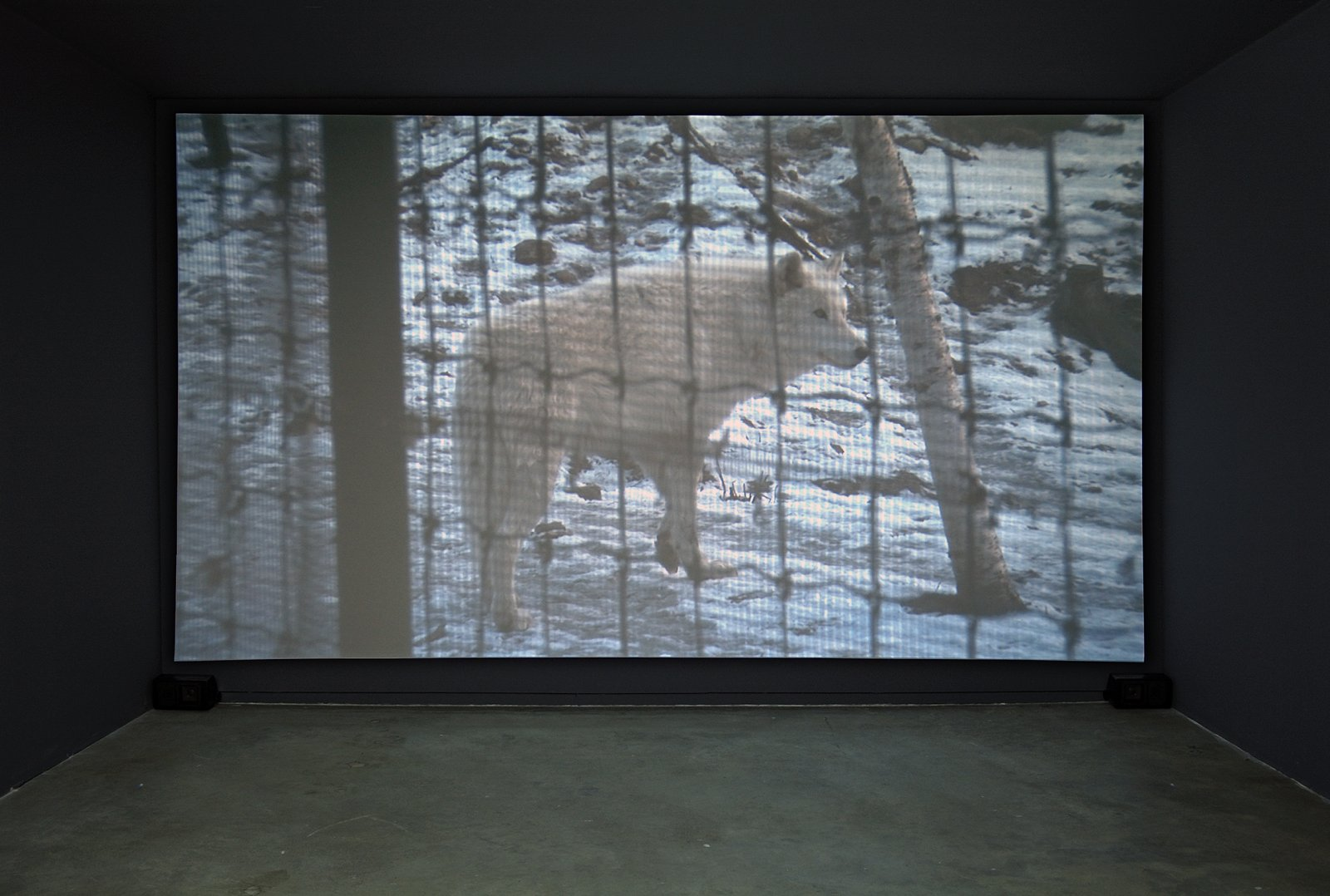 Kevin Schmidt, Sad Wolf (detail), 2006, DIY projection installation, 4 minutes, 11 seconds. Installation view, Catriona Jeffries, Vancouver, 2006 by Kevin Schmidt